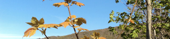 thinning trees